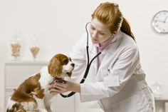 A veterinarian can diagnose bladder stones.