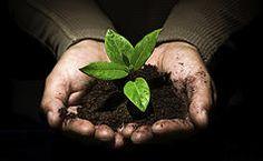 Save time and energy in your backyard garden with no-till 'seedball' growing technique Organic Gardening, Gardening Tips, Gardening Vegetables, No Till Garden, Healthy Seeds, Garden Compost, Peeling, Urban Farming, All Plants