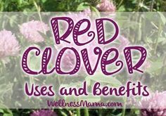 Red clover is a very versatile herb with uses in blood health, hormone health, digestive health and even protecting against certain types of cancer.