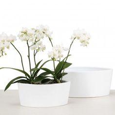 Orchideentopf Oval Panna