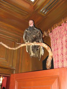 """Club 33 vulture / Originally the animatronic birds were able to listen in on dinners conversations in order to personally interact with them, adding to the dinning experience, but some patrons were uncomfortable with being """"spied"""" on. The birds no longer interact, but are they still listening? One of the strange mysteries that revolve around the infamous Club 33."""