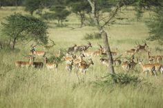 Our best-seller tour to discover wildlife and landscapes of the country – The best of all safaris in Tanzania  Type: Safaris in Tanzania, accommodation in lodges or bivouac with private vehicle an…