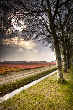 Hillegom, Zuid-Holland.