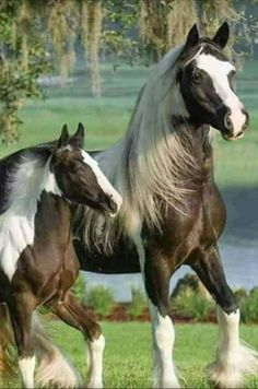 I love animals. Especially horses and puppies. So, except for 1 momentary lapse in judgement, animals are what you will see here. Horses And Dogs, Cute Horses, Horse Love, Wild Horses, Show Horses, Animals And Pets, Most Beautiful Animals, Beautiful Horses, Beautiful Creatures