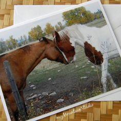 Horse Love Photo Note Card - Equine Photography Montana - myMountainStudio