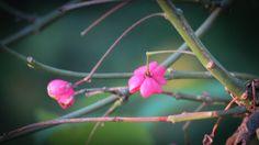 A Little Bit of Pink on Pinterest