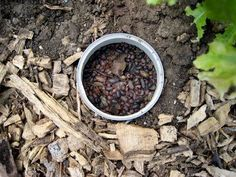 Easy way to get rid of Pill Bugs - Rolly Pollies - Potato Bugs
