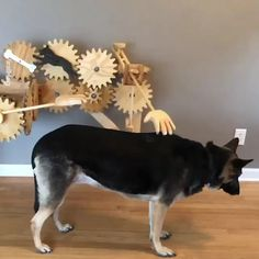 51 New ideas for funny dogs cute doggies Funny Animal Videos, Cute Funny Animals, Funny Animal Pictures, Funny Babies, Funny Dogs, Cute Dogs, Funny Humor, Animals And Pets, Best Dogs