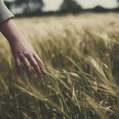 Have always wanted to be in a field of wild grass with no one for miles around.