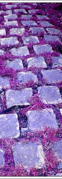 The purple path to who knows where....