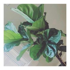 I loooooove house plants.  They make me happy.  They make me feel balanced.  They help me feel grounded.  Yes they are another 10  (and that's a guess!) things I have to take care of in addition to two kids and two dogs but.... I love the way they make me