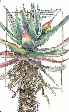 Sketch Book Artist Jane LaFazio on Artistically Speaking Talk Show . - Jane LaFazio, a full-time artist since truly believes she is living the life she was meant to live! Hear all about her creative life and lifestyle Watercolor Sketchbook, Watercolor Artists, Art Sketchbook, Watercolor Paintings, Watercolours, Watercolor Cactus, Fashion Sketchbook, Watercolor Portraits, Watercolor Landscape