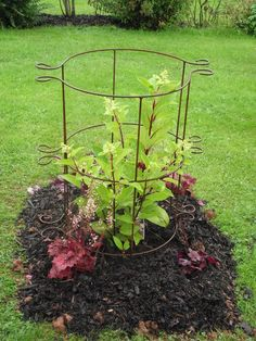 Pack of 2 Plant Girdle Tall - 41cm x 100cm 3 Ring A0091 - Plant Girdle, plant supports - - Plant Supports