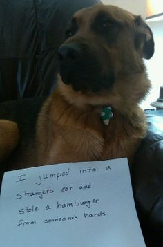 The Best of Dog Shaming - Part 22 (21 pics) - FB Troublemakers