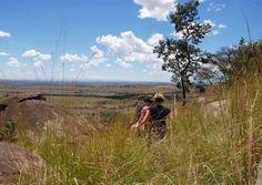 Congo, Zimbabwe and Botswana – Untouched Forest and Surreal Wildlife