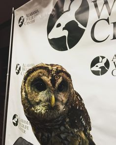 Coosa the (very sweet) Barred Owl is glad you're hanging out with us at #wildaboutchocolate at the @harbertcenter!