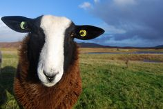 Wool - Uist Wool