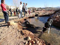 dog park water feature--  Dog Town Dog Park - Washington City, Utah - Where Dixie Begins
