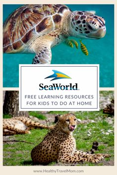 Free Learning Resources from SeaWorld San Diego - Healthy Travel Mom California Attractions, Attractions In Orlando, California City, California Travel, San Diego Travel, Family Adventure, Sea World, Learning Resources, Cool Places To Visit