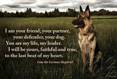 German shepherds. I love all types and sizes of dogs but German Shepherds will always be at the top of my list