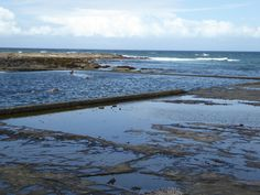 Gerringong's Boat Harbour pool, formerly the Ladies' Pool. 50m but gets quite shallow at the cliff end.