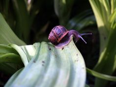 snail | Flickr - Photo Sharing!