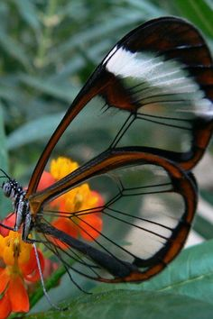 """The butterfly counts not months but moments, and has time enough.""   ― Rabindranath Tagore"