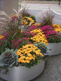 Fall container gardening flowers ornamental cabbage ornamental grasses pansies mums welcome - Potted autumn flowers ...