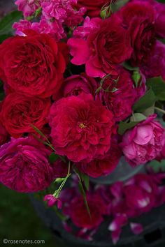 Red-roses-close