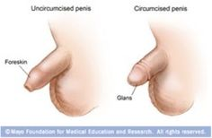 drawing circumcised penis - Google Search