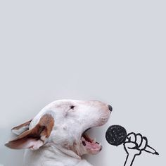 Brazilian illustrator, Rafael Mantesso loves to put his pet bull terrier, named Jimmy Choo, into funny and creative compositions. Bull Terriers Anglais, English Bull Terriers, Jimmy Choo, Animals And Pets, Funny Animals, Cute Animals, Perros Bull Terrier, Pet Dogs, Dog Cat