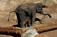 Elephant Mother and Son by GPNaturePhotos on Etsy