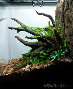 Tropical Terrarium