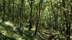 Los bosques más bonitos de Madrid Madrid, Vineyard, Outdoor, Bonito, Forests, Viajes, Outdoors, Vine Yard, Vineyard Vines