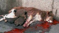 Cumplimiento de la ley de derecho animal / Strafverfolgung von Tierrechten / Law enforcement of animal rights https://www.change.org/p/presidente-de-bolivia-evo-morales-ayma-organismos-y-defensa-animal-de-bolivia-cumplimiento-de-la-ley-d-derecho-animal
