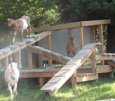 Animal Enrichment Fund by Woodstock Farm Animal Sanctuary Help us build a goat playscape! Mini Goats, Cute Goats, Baby Goats, Keeping Goats, Raising Goats, Goat Playground, Goat Toys, Goat Shelter, Goat Pen