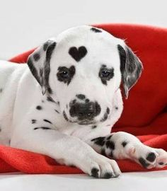 Animals Who Wear Their Heart on Their Fur