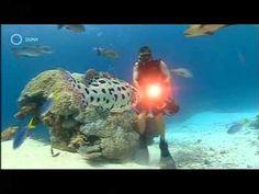Tengeri paradicsom, Ausztrália Fish, Pets, Animals, Animales, Animaux, Pisces, Animal, Animais, Animals And Pets