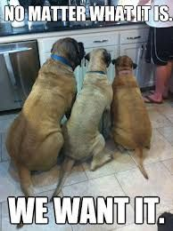 All four of my dogs sit in the kitchen when I'm in there and this is exactly what they are saying to me.
