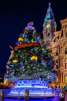christmas tree at philly city hall