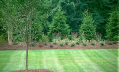 Norway Spruce are one of the best evergreen trees for privacy. Stagger them for a natural look. Add some ornamental trees in front.the greenery behind will really make them pop. Perennials in the front layer can provide interest throughout all the seaso