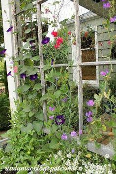 Trellis made from old window frame and chicken wire. Beautiful.