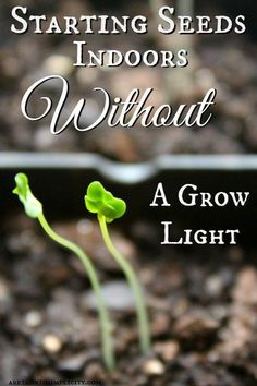 Tips for starting Seeds without a grow light #gardening #seedstarting #dan330 http://livedan330.com/2015/03/02/starting-seeds-indoors-without-a-grow-light/