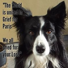 PLEASE PRAY FOR FRANCE AND THE INNOCENT VICTIMS OF NICE...WE ARE ALL UNITED IN GRIEF ONCE MORE...GOD BLESS FRANCE. #Je Suis Diesel#JeSuisChien#New in the life of Asha...!