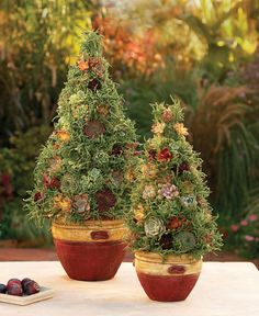 <p>Individually, succulents and topiaries are great