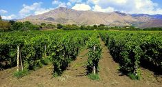 Hints of volcano in wines from Sicily's Mount Etna