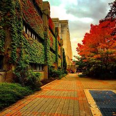 Fall on campus has never looked better. Stunning from community member York University, School Photography, Sidewalk, Wellness, Community, Colour, Fall, Instagram Posts, Pictures