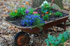 wheelbarrow planter ideas   wheelbarrow planter i loaded up the old wheelbarrow with plants today ...