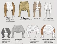 I'm loving the participation from everyone. What frame does your bull have? Bully Pitbull, Pitbull Terrier, American Bully Pocket, American Pitbull, American Bullies, American Bully Kennels, Dog Breed Info, Scary Dogs, English Bulldog Puppies