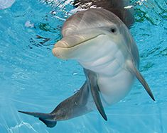 I had no idea that the true stories behind Dolphin Tale & Dolphin Tale 2 involved this amazing animal rescue. Read all about Winter and Hope, and all the other critters with happy endings!
